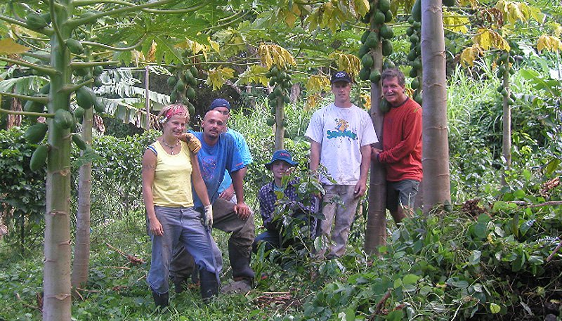 Photo: Papaya Farmers in Hawaii