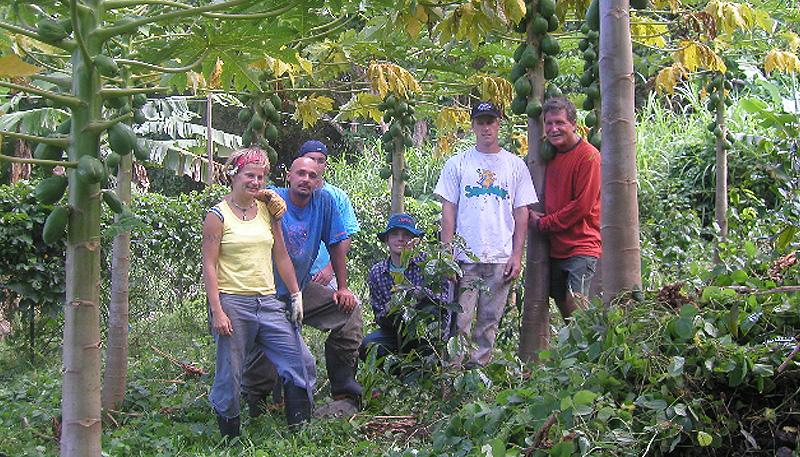 Photo: Papaya Farmers in Hawaii
