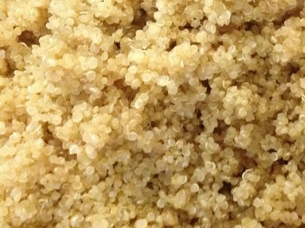 Photo: Sprouted Quinoa