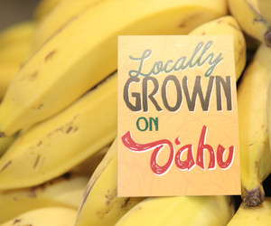 Photo: Bananas with Sign Reading Locally Grown on Oahu